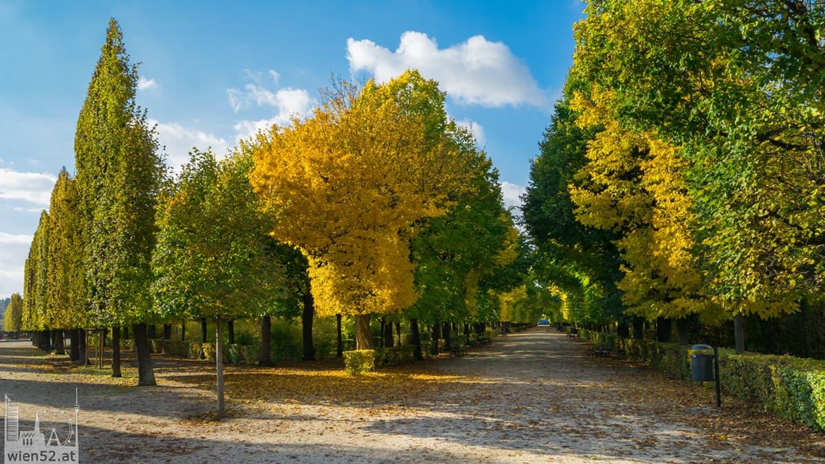 Herbst  Schlosspark in Schönbrunn