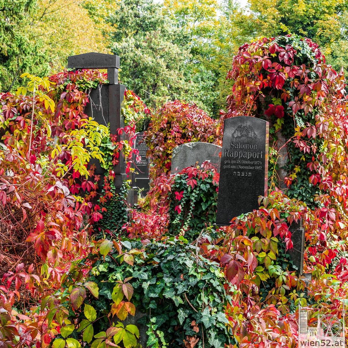 Herbst  Wiener Zentralfriedhof