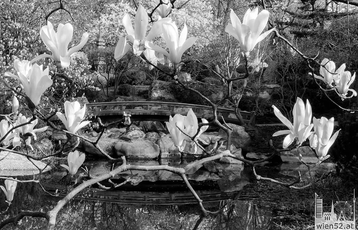 Frühling im Setagayapark