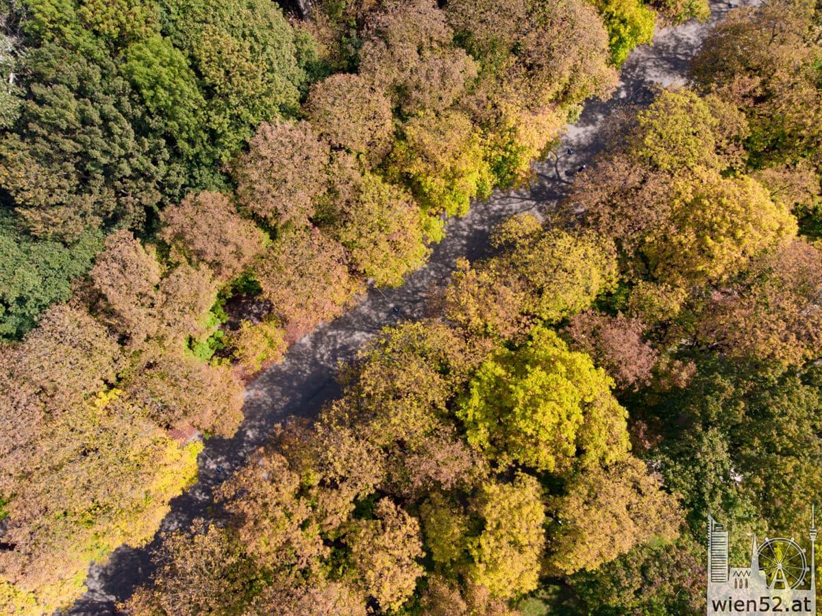 Prater-Hauptallee im Herbst