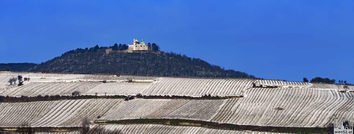 Weingärten im Schnee  Leopoldsberg