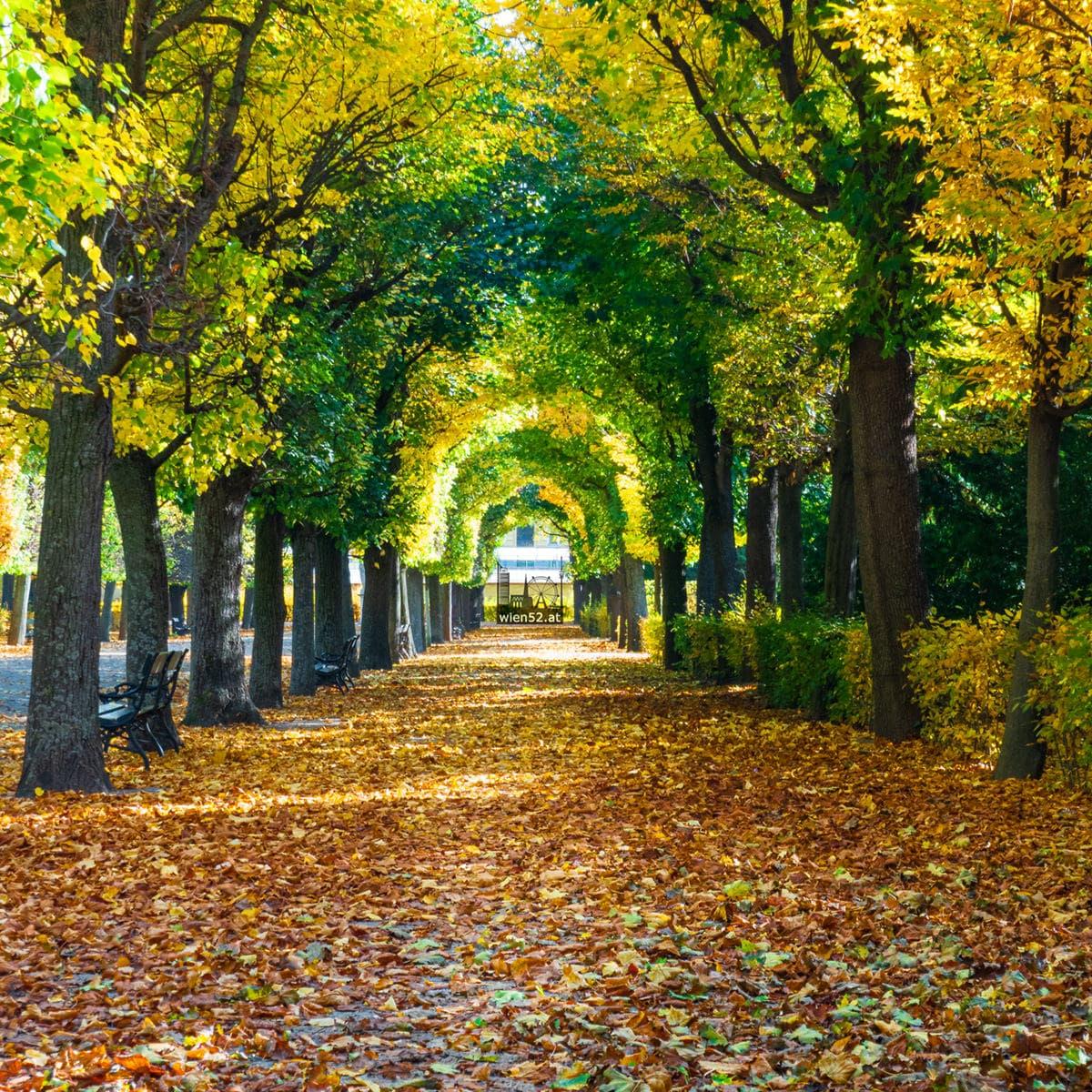 Herbst im Schlosspark Schönbrunn