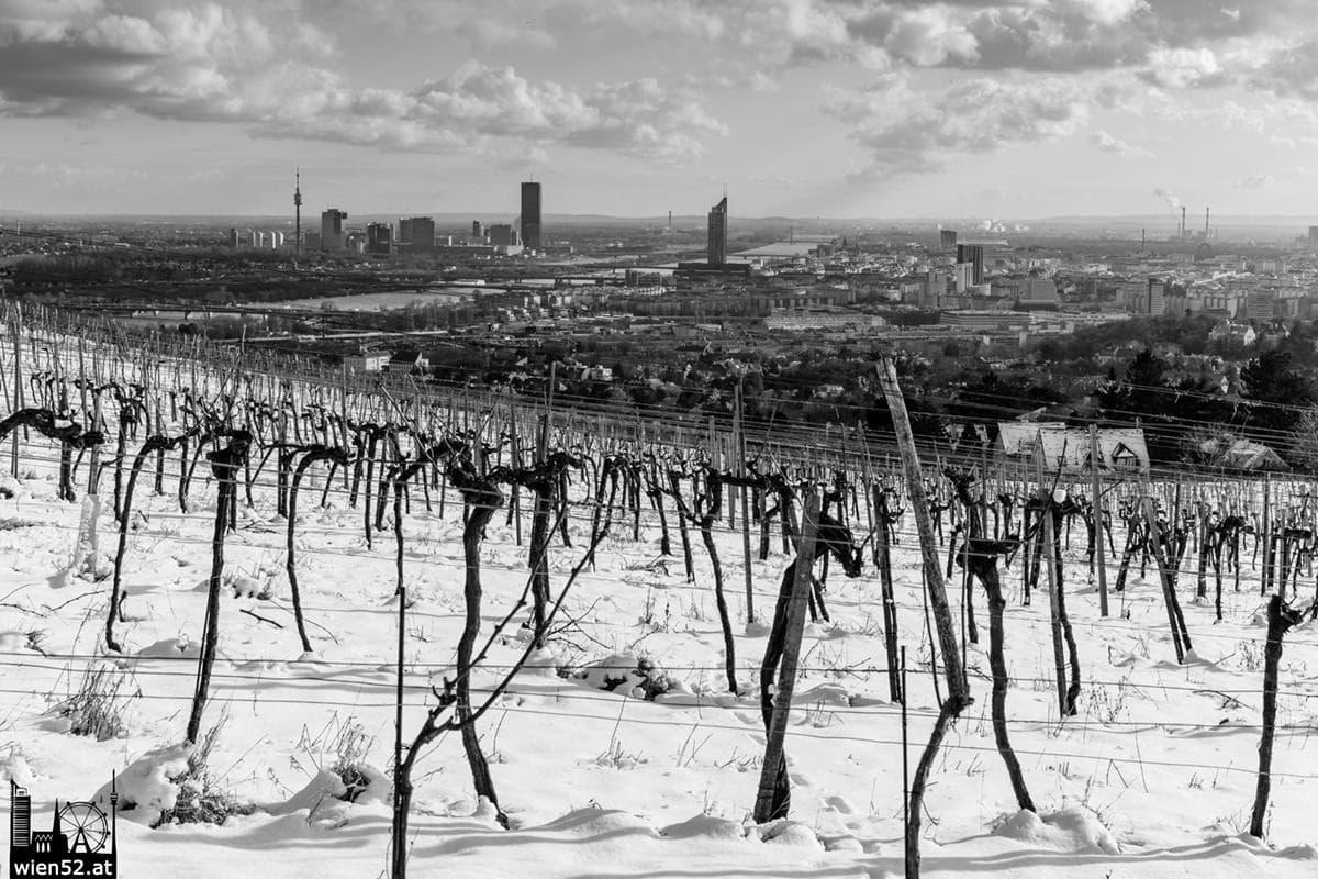 Kahlenberger Weinberge im Schnee